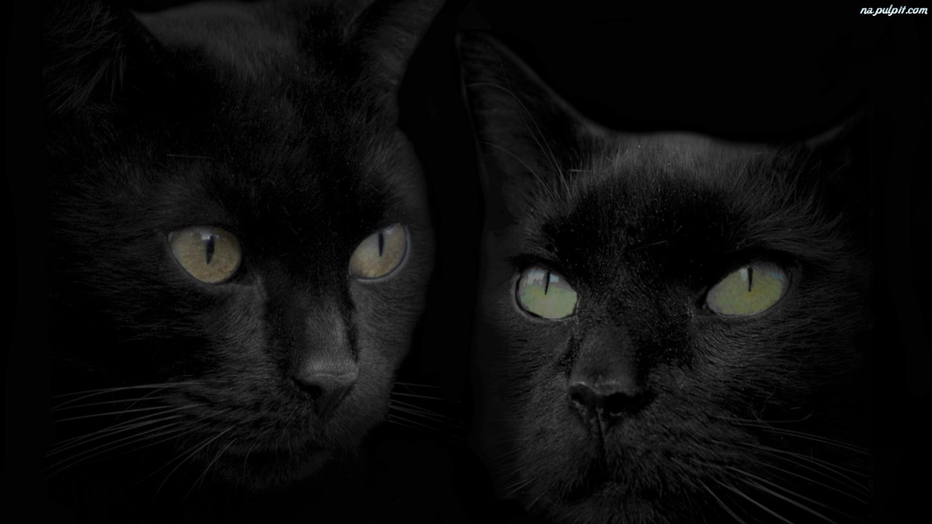 Черно белые обои на рабочий стол коты 5
